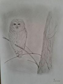 Eule, Natur, Vogel, Baum