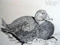 Zeichnung, Tiere, Ente, Zeichnungen