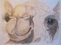 Kamel, Oman, Pastellmalerei, Zeichnungen