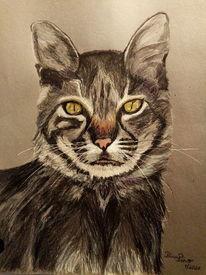 Katze, Portrait, Mischtechnik,