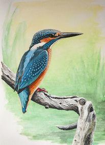Tiere, Vogel, Eisvogel, Natur