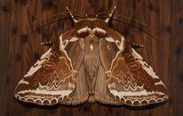 Intarsienbilder, Kunsthandwerk, Holz, Marketerie