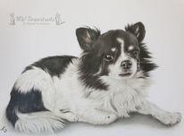 Hund, Polychromos, Buntstiftzeichnung, Zeichnung