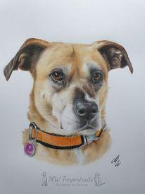 Buntstiftzeichnung, Zeichnung, Hund, Polychromos