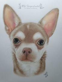 Tierzeichnung, Chihuahua, Zeichnen, Buntstiftzeichnung