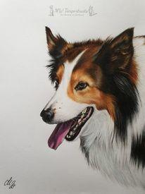 Hund, Polychromos, Zeichnung, Zeichnungen