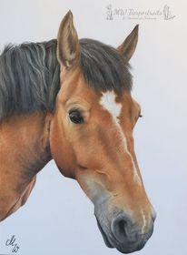 Zeichnung, Polychromos, Pferde, Zeichnungen