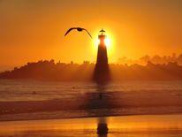 Möwe, Leuchtturm, Sonnenuntergang, Santa cruz