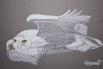 Harfang, Schneeeule, Fliegen, Zeichnungen