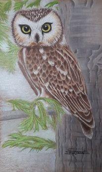 Eule, Baum, Blick, Malerei