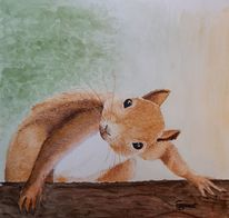 Blick, Humor, Eichhörnchen, Aquarell