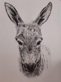 Esel, Tuschmalerei, Zeichnung, Zeichnungen
