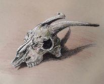 Schädel, Tuschezeichnung, Ziegen, Zeichnungen