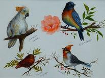 Vogel, Singvogel, Kakadu, Hüttensänger