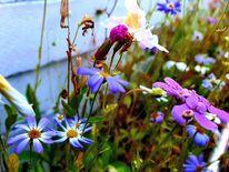 Bunt, Sommer, Blumen, Fotografie