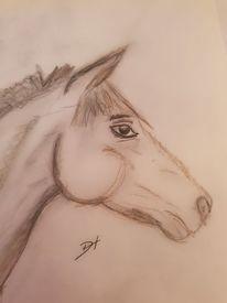 Bleistiftzeichnung, Pferde, Tiere, Zeichnungen
