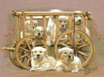 Tierkinder, Hund, Leiterwagen, Welpe