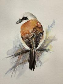 Natur, Tiere, Aquarellmalerei, Neuntöter