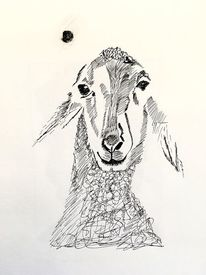 Schaf, Blick, Feder, Zeichnungen
