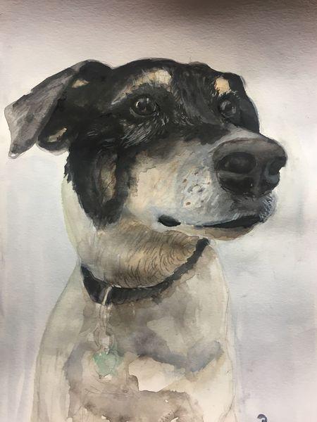Portrait, Aquarellmalerei, Hund, Handarbeit, Vierbeiner, Tiere