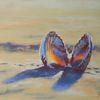 Strand, Licht, Schatten, Muschel