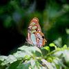 Libelle, Deutschland, Sommer, Blumen