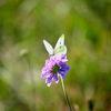 Deutschland, Schmetterling, Naturschutz, Sommer