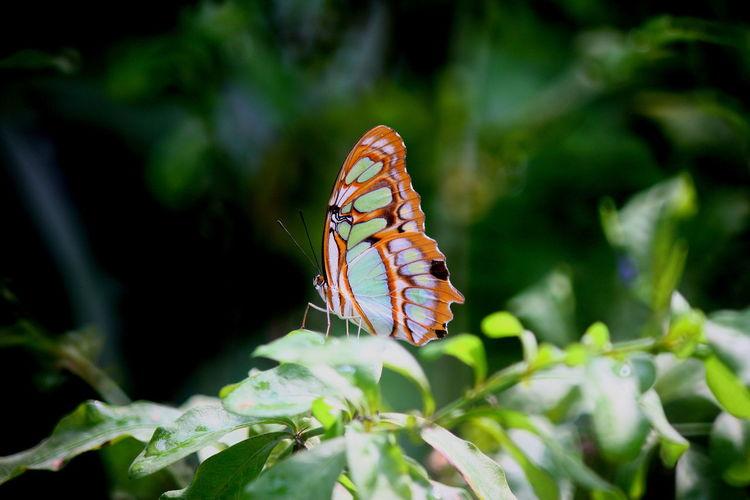 Tiere, Blätter, Blüte, Schmetterling, Naturschutz, Pflanzen