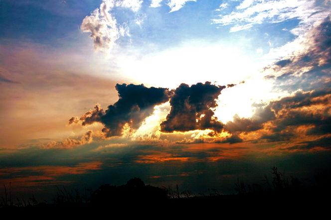 Weizen, Wolken, Licht, Pflanzen, Gerste, Himmel