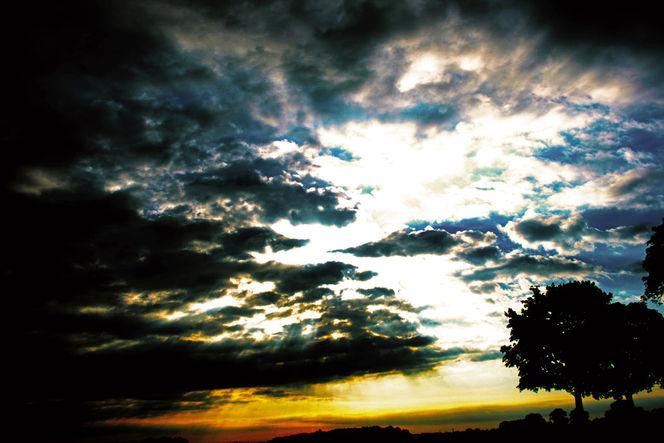Himmel, Früh, Gelb, Grün, Baum, Wolken