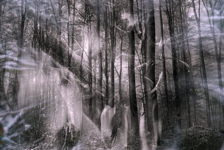 Baum, Holz, Sonne, Äste, Rinde, Licht
