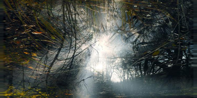 Himmel, Baum, Wasser, Pflanzen, Schatten, Licht
