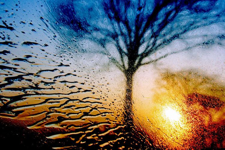 Scheibe, Sonne, Zweig, Wind, Geschwindigkeit, Regen
