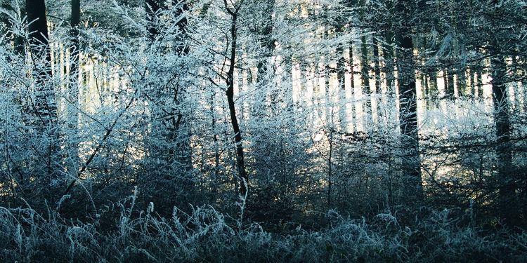 Baum, Zweig, Sonne, Schnee, Strauch, Nadel