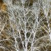 Zweig, Sonne, Pflanzen, Stamm