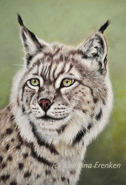 Tier malerei, Tierwelt, Luchs1, Pastellmalerei, Tierportrait, Realismus