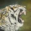 Beast, Buntstifte, Tierportrait, Katze