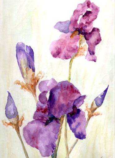 Blumen, Blütenzweig, Iris, Blüte, Schwertlilie, Aquarell