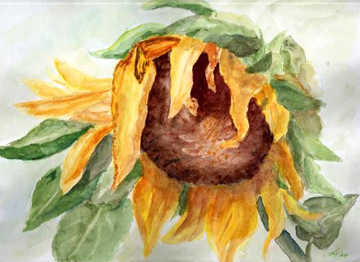 Sonnenblumen, Herbst, Gelb, Aquarellmalerei, Aquarell