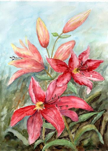 Sommer, Blüte, Rot, Lilien, Garten, Aquarell