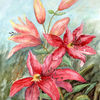 Blüte, Rot, Lilien, Garten