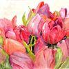 Tulpen, Bunt, Frühling, Mijello