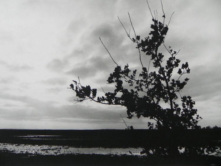 Westermoor, Regen, Wasser, Eichen, Fotografie