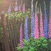 Lupinen, Sommer, Blumen, Zaun