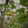 Herbst20141, Oktober, Kürbiss, Fotografie