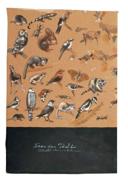 Aussterben, Tiere, Schautafel, Bestimmung, Zeichnungen, Schnell
