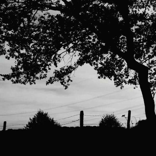 Schatten, Lichtschatten, Baum, Landschaft, Licht, Schwarz