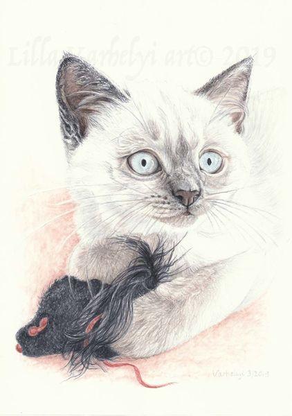 Babykatze, Tierportrait, Tiere, Katerchen, Tusche, Katze
