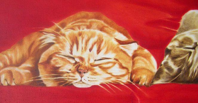 Katze, Katzenkopf, Faul, Tierportrait, Stufe, Rot