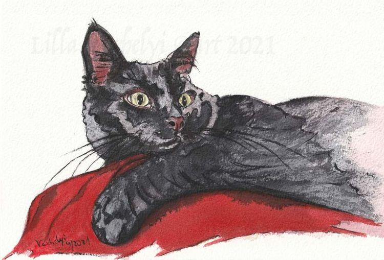 Katze, Tierportrait, Tuschmalerei, Schwarz, Skizze, Zeichnungen